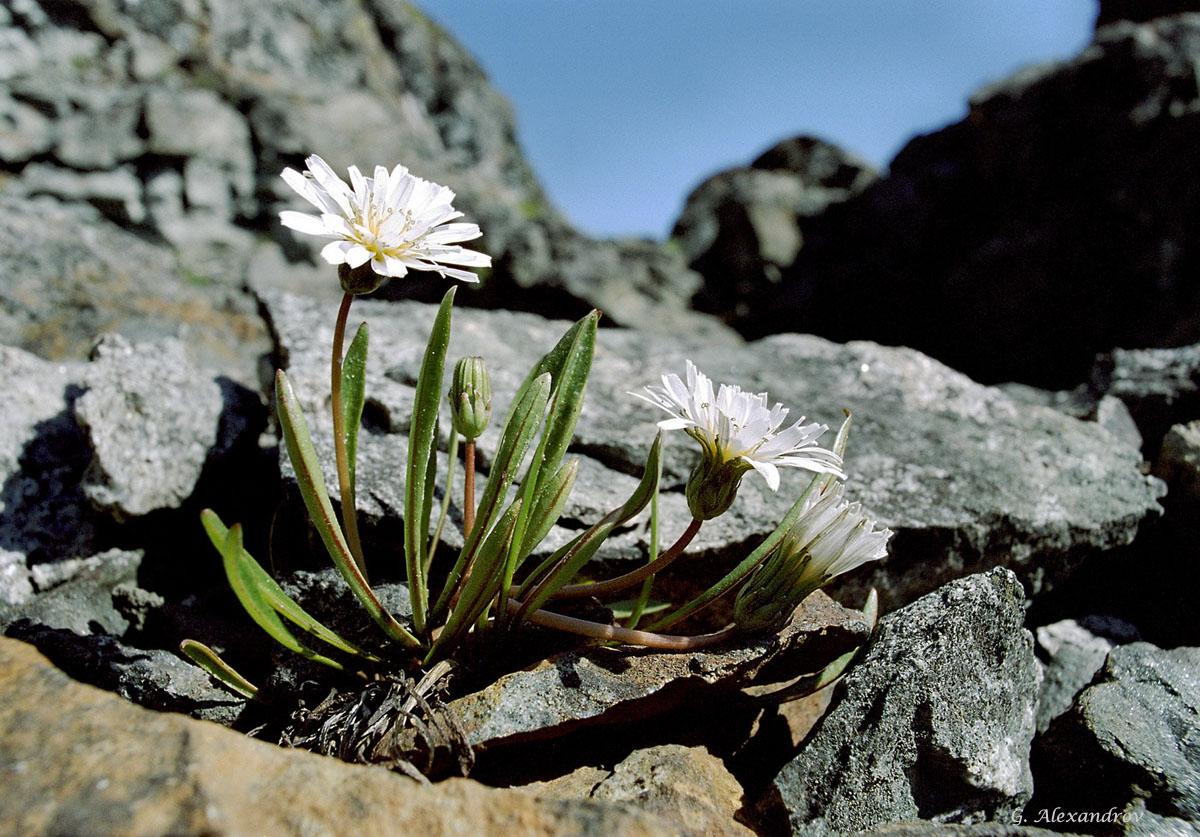 Заповедник Кандалакшский цветы и цветки